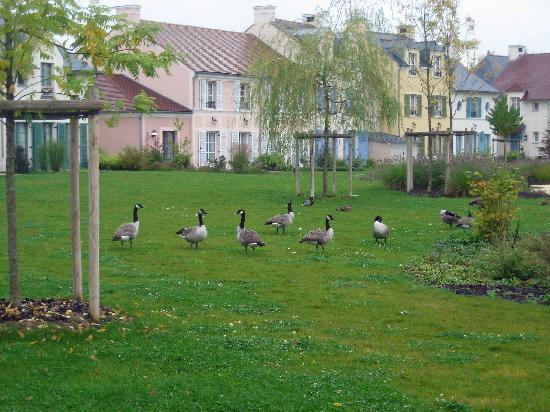 Marriott's Village d'lle-de-France: Geese
