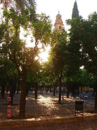 Córdoba, España: Garten Mezquita