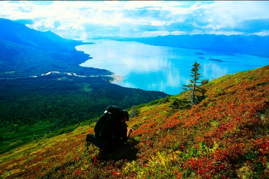 Anchorage, AK: Berry picking in Lake Clark National Park