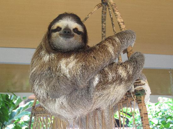 Aviarios del Caribe Sloth Sanctuary : Buttercup, her Royal Highness