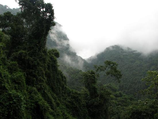 Merida, เวเนซุเอลา: Cloud forest East of town, near Ejido