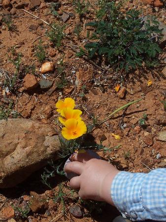 Elkhorn Ranch: Easter egg hunt in the desert poppies