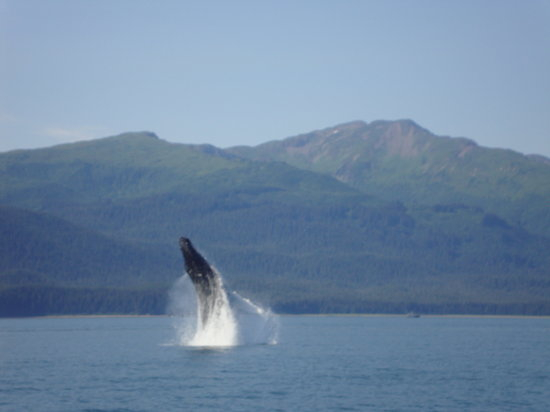 Hi Time Charters: Quite the Jump, Auke Bay HumpBack!