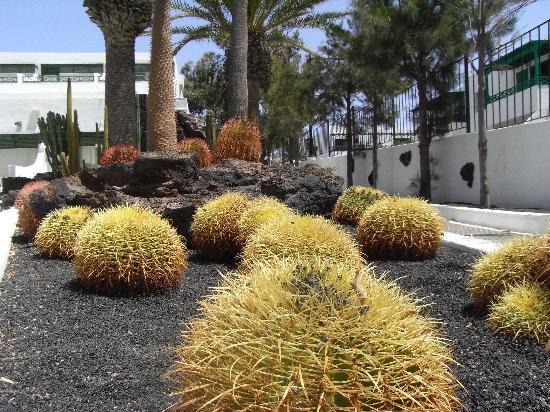 Arena Dorada Apartments: Arena Dorada Gardens