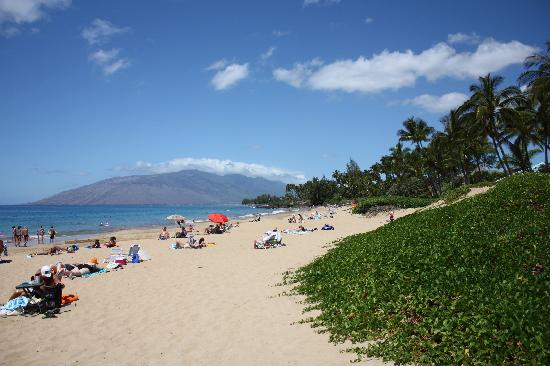 Maui Coast Hotel: beach across the street