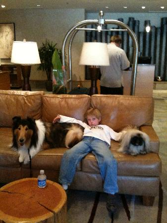 Hotel Lobby After A Long Fun Day Picture Of The Westin Monache