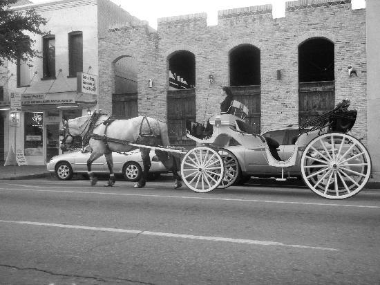 Austin, TX: Horse & Carriage