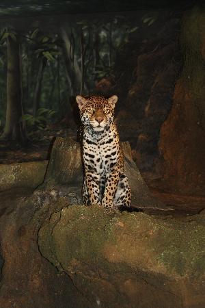 Milwaukee County Zoo: Cheetah