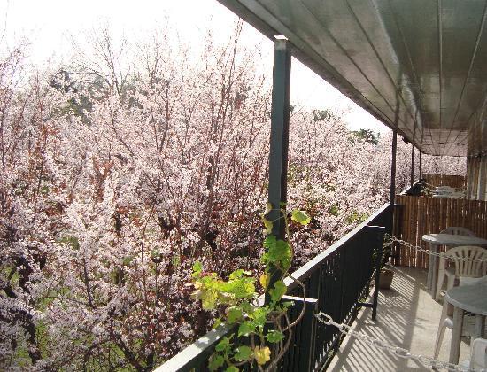 Hotel Agustin Garcia: Balcón que da a las habitaciones
