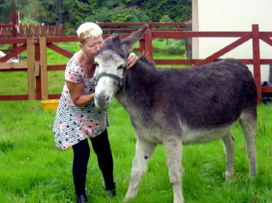 Mystical Rose Bed and Breakfast: Noreen & her new donkey