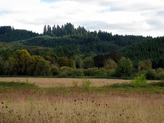 The Alsea Highway