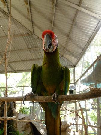 Acuario Mazatlan: Inside one of the aviaries.