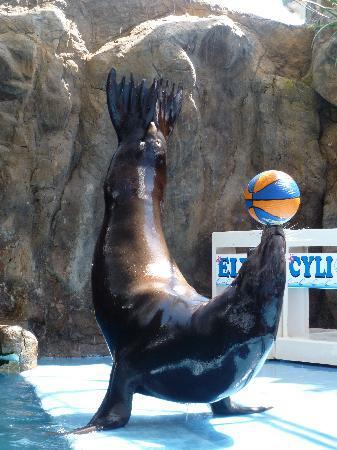 Acuario Mazatlan: Sea Lion Show