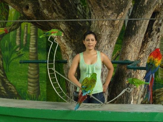 Acuario Mazatlan: Parrot show.