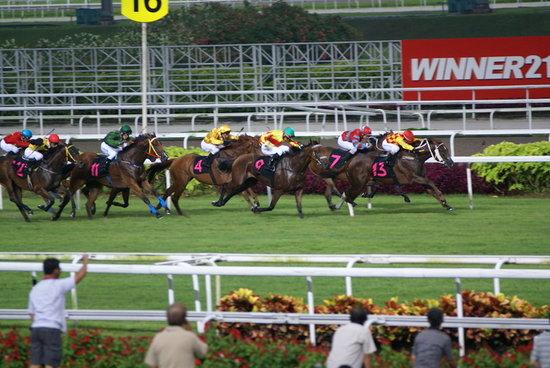 新加坡赛马公会