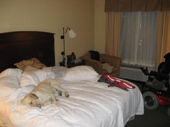 Hampton Inn & Suites Denver Littleton: The room was spacious and accommodated my sizable electric wheelchair + a very large dog (withou