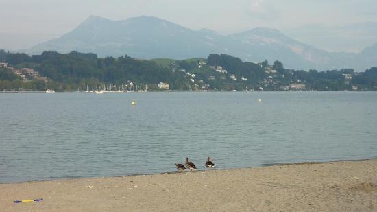 Lucerne, Switzerland: Kleine Strand, der See und die Gebirge