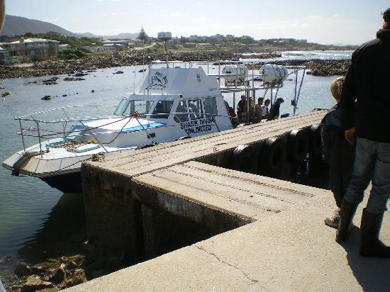 Gansbaai, South Africa: Are we gonna need a bigger boat ?