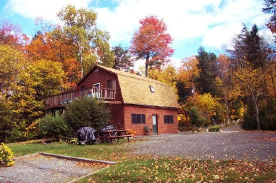 Cozy Moose Lakeside Cabin Rentals: Lakeview Cabin Accommodation