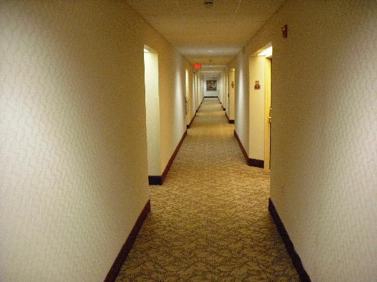 Hampton Inn & Suites Newtown: Hallway