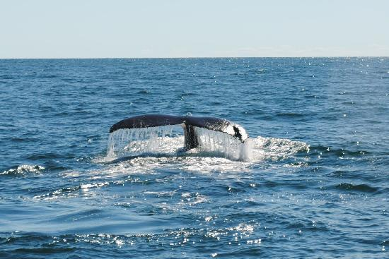 Cape Ann Whale Watch: Whale Tale