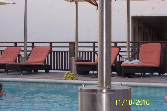 Bel Jou Hotel: unexpected pool visitor..ducks..