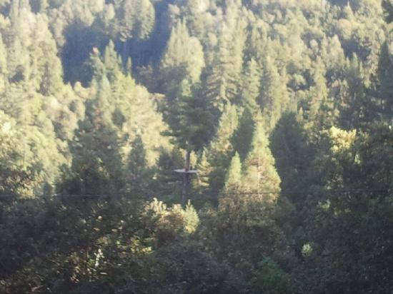 Sonoma Canopy Tours: Great views