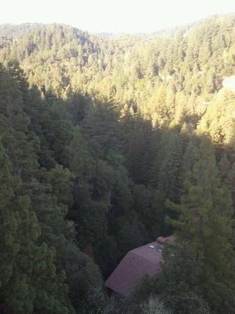 Sonoma Canopy Tours: Amazing