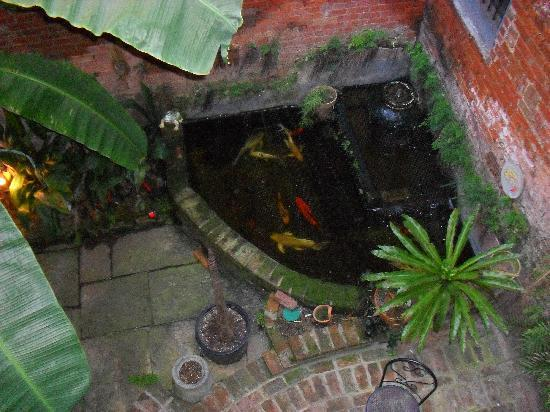 Biscuit Palace Guest House: Koi pond patio