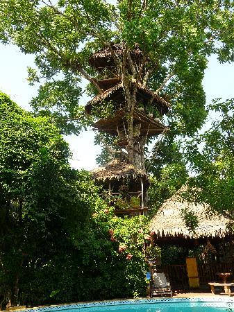 ‪لا كاسا فيتزكارالدو: Amazing Treehouse‬