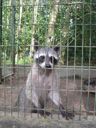 El Valle de Anton, Panama/Panamá: Zoologico Nispero 03