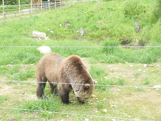 "Dreamcatcher Hostel: This ""Boo"" the grizzly bear at Golden"