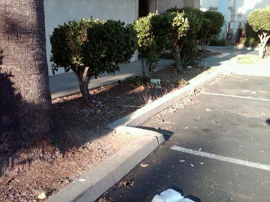 Days Inn San Jose Milpitas: Trash, trash, trash...everywhere!! Cigarette butts all over the place.