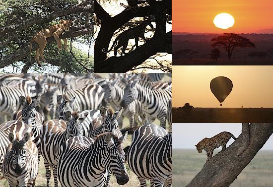 Kiboko Lodge: Collage of pictures