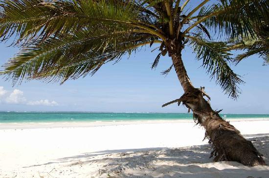 Diani Beach, Kenya: Beach