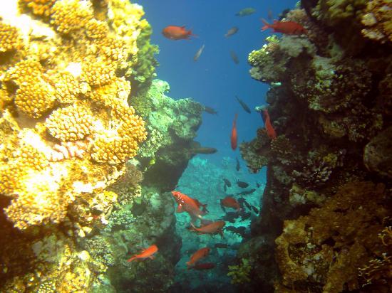 Flamenco Beach and Resort: diving