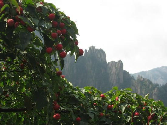 Mt. Huangshan (Yellow Mountain) 사진