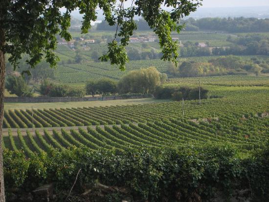 Chateau Bellevue: hotel vineyard