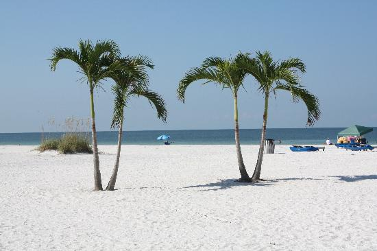 Grand Plaza Beachfront Resort St Pete Beach Reviews