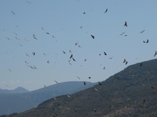 Hospederia Santa Fe : Lunchtime! (for vultures)