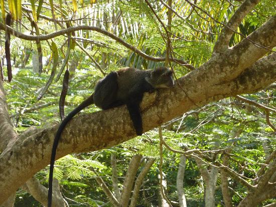Diani Sea Resort: afternoon nap