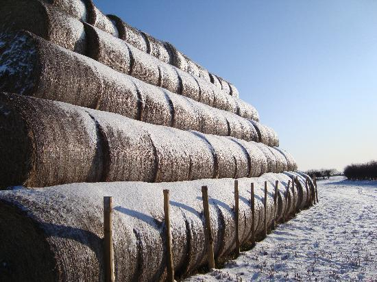 Brackenborough Hall Coach House Holidays: The stacked bales in winter