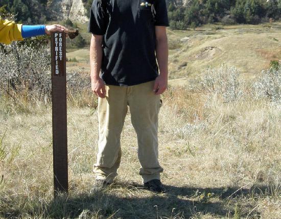 Petrified Forest Loop: trailmarker