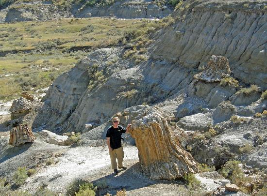 Theodore Roosevelt National Park, นอร์ทดาโคตา: petrified stumps