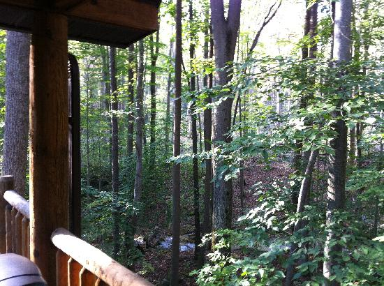 Mountain Creek Cabins: View From Deck