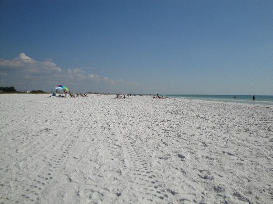 Beach Palms: The beach!