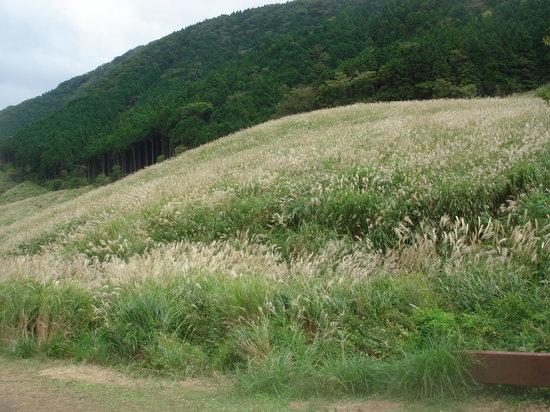 Hakone-machi, Japan: すすき遊歩道から