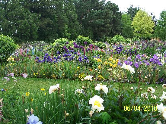 Salem, OR : Irises, lupines and alium