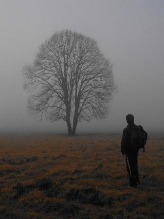 Galicia, España: camino de santiago, o cebreiro