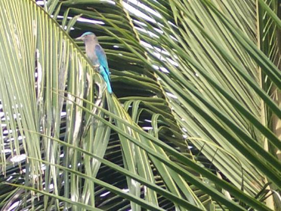 グランド シー ビュー ホテル, 朝食会場の窓の外にこんな鳥が来ました。